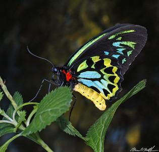 Butterfly Conservatory 11