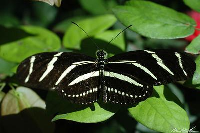 Butterfly Conservatory 20