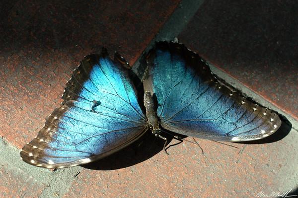 Butterfly Conservatory 17