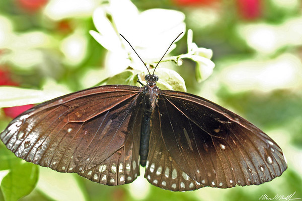 Butterfly Conservatory 21