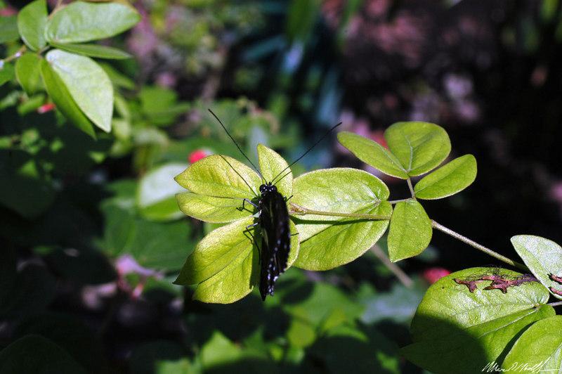 Butterfly Conservatory 22