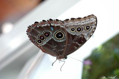 Butterfly Conservatory 16