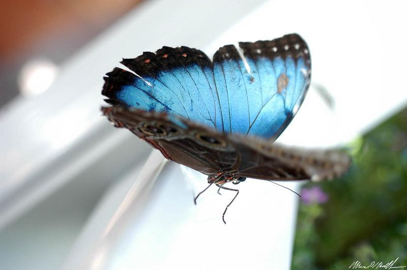 Butterfly Conservatory 15