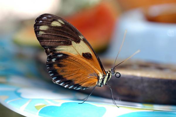 Butterfly Conservatory 05