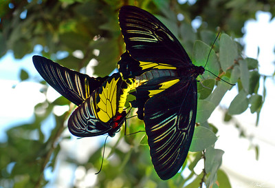 Butterfly Conservatory 19