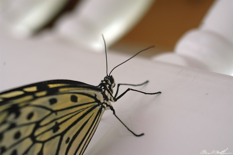 Butterfly Conservatory 14