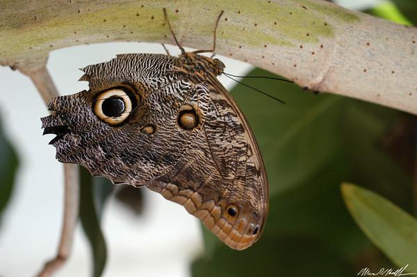 Butterfly Conservatory 06
