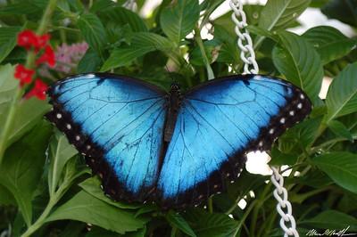 Butterfly Conservatory 07