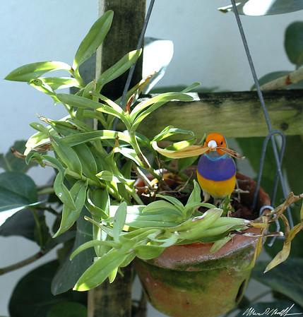 Butterfly Conservatory 04