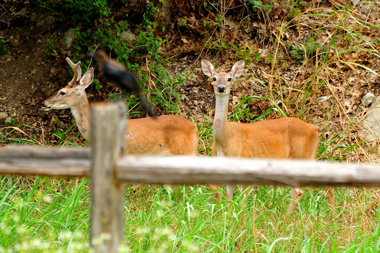 Extremely hot and exceptionally dry here.  The Deer are suffering!  But, they eat our landscape.