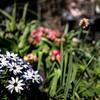 Garden Bokeh