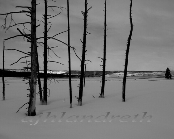 22 - Trees & Snow, Yellowstone, Wyoming
