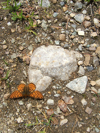 4 - Butterfly, Cottonwood Pass, CO