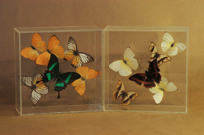 Thrift store Butterfly Boxes