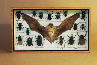 Beetle/Bat Box
