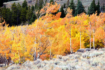 Bighorn Mountains, Wyoming, USA.