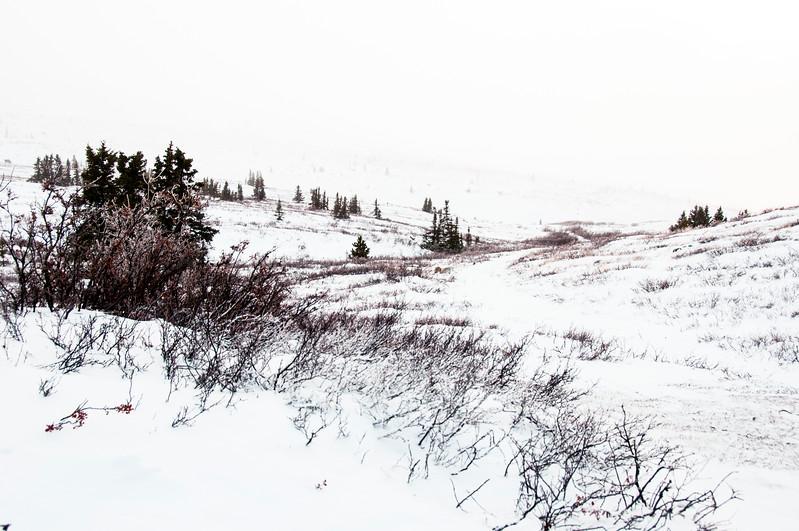 Yukon wilderness, outside Whitehorse, Canada
