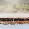 Dust of the Wildebeest