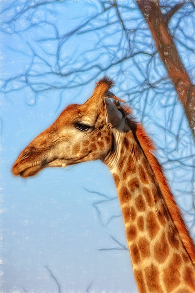A Giraffe and His Bird