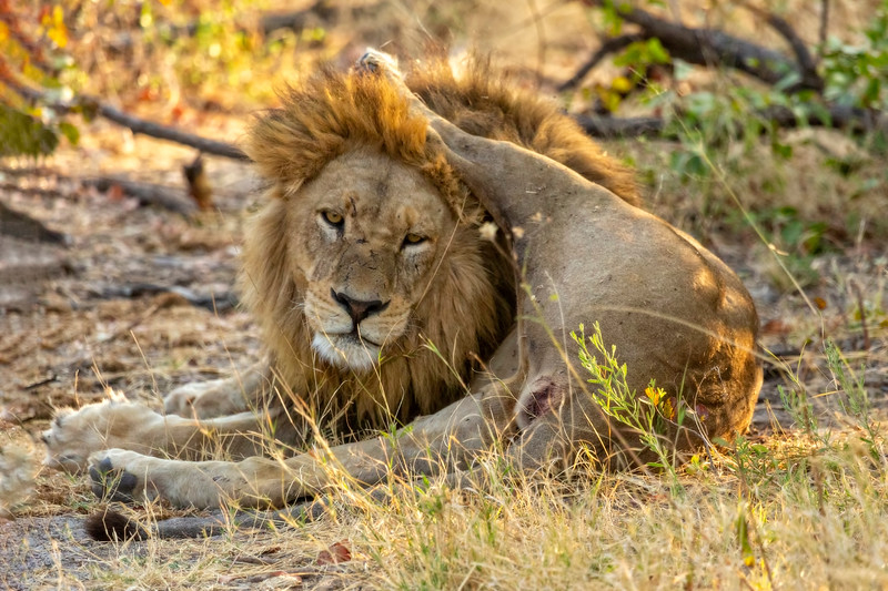 Lion Yoga