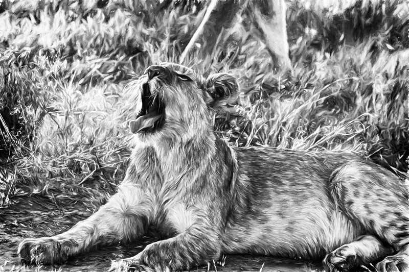 Sleepy Lion Cub in Black and White