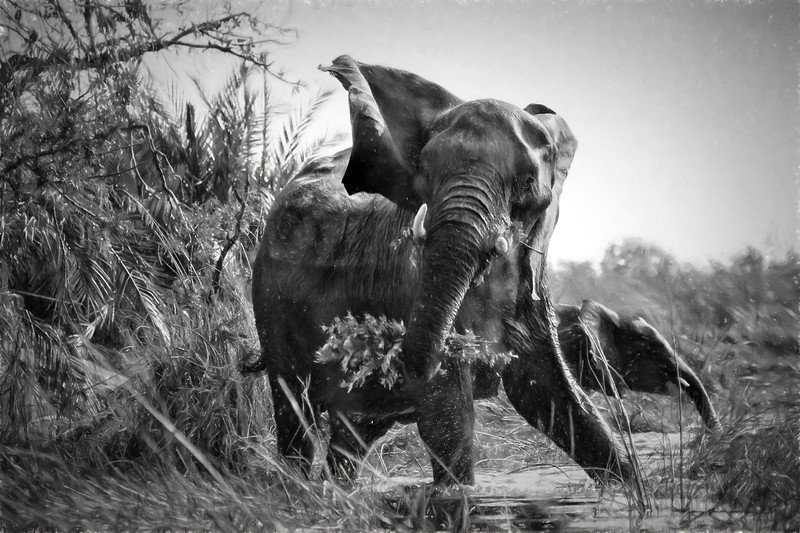 Protective Mama Elephant Embellished in Black and White