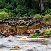 Wildebeest Into the River