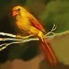 Gentle Female Cardinal