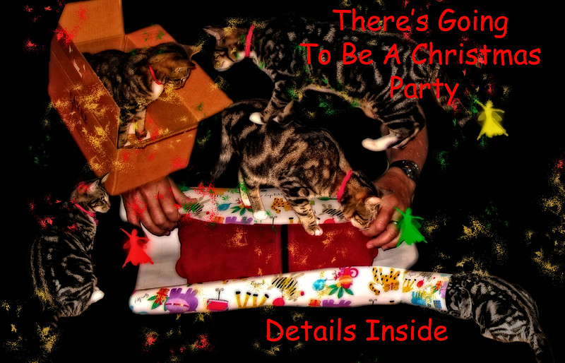 Cats Christmas Party Invitation