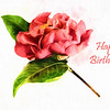 Camellia Happy Birthday Card