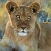 Lion Cub Cezanne