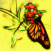 Monarch Butterfly Graphic Sketch