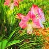 Amaryllis Cezanne