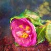 Wild Camellia