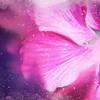 Hibiscus Scatter