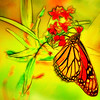 Monarch Butterfly Abstract  Bright