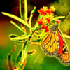 Monarch Butterfly Abstract Glow