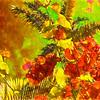 Flamboyant Bougainvillea