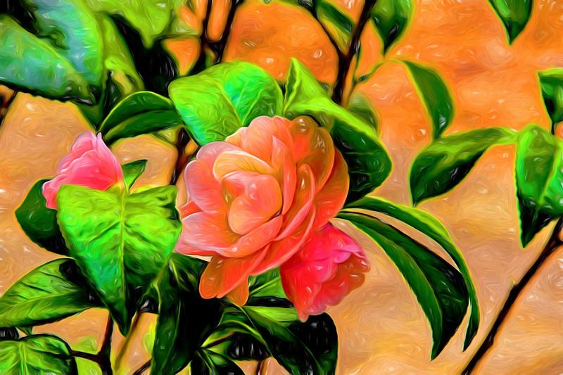 Camellia Candy