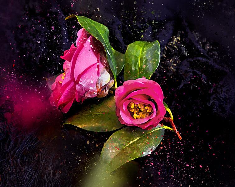 Camellia Stardust