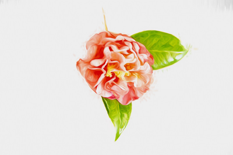 Light and Bright Camellia