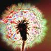 Dandelion Glow Bright