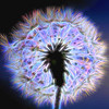 Neon Dandelion Abstract