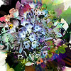 Hydrangea Abstract