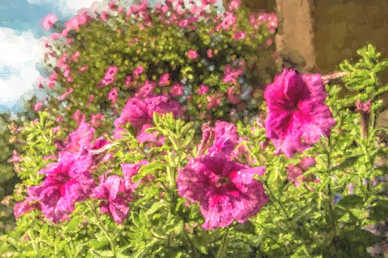 Pink Petunias in Flower Box