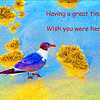 Having a Great Time Sea Gull