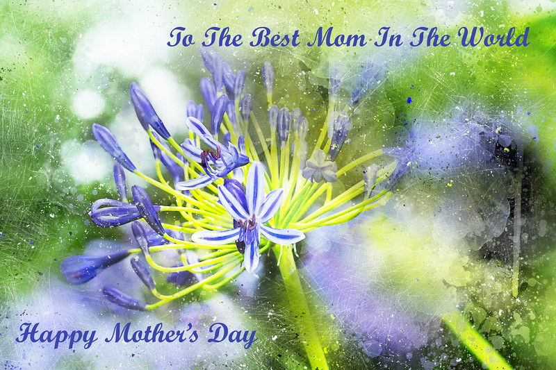 Mother's Day Card With Agapanthus