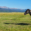 Me and My Shadow - a Wyoming Horse