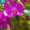 Artsy Cymbidium Orchid 1