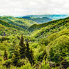 The Colors of the Smokies